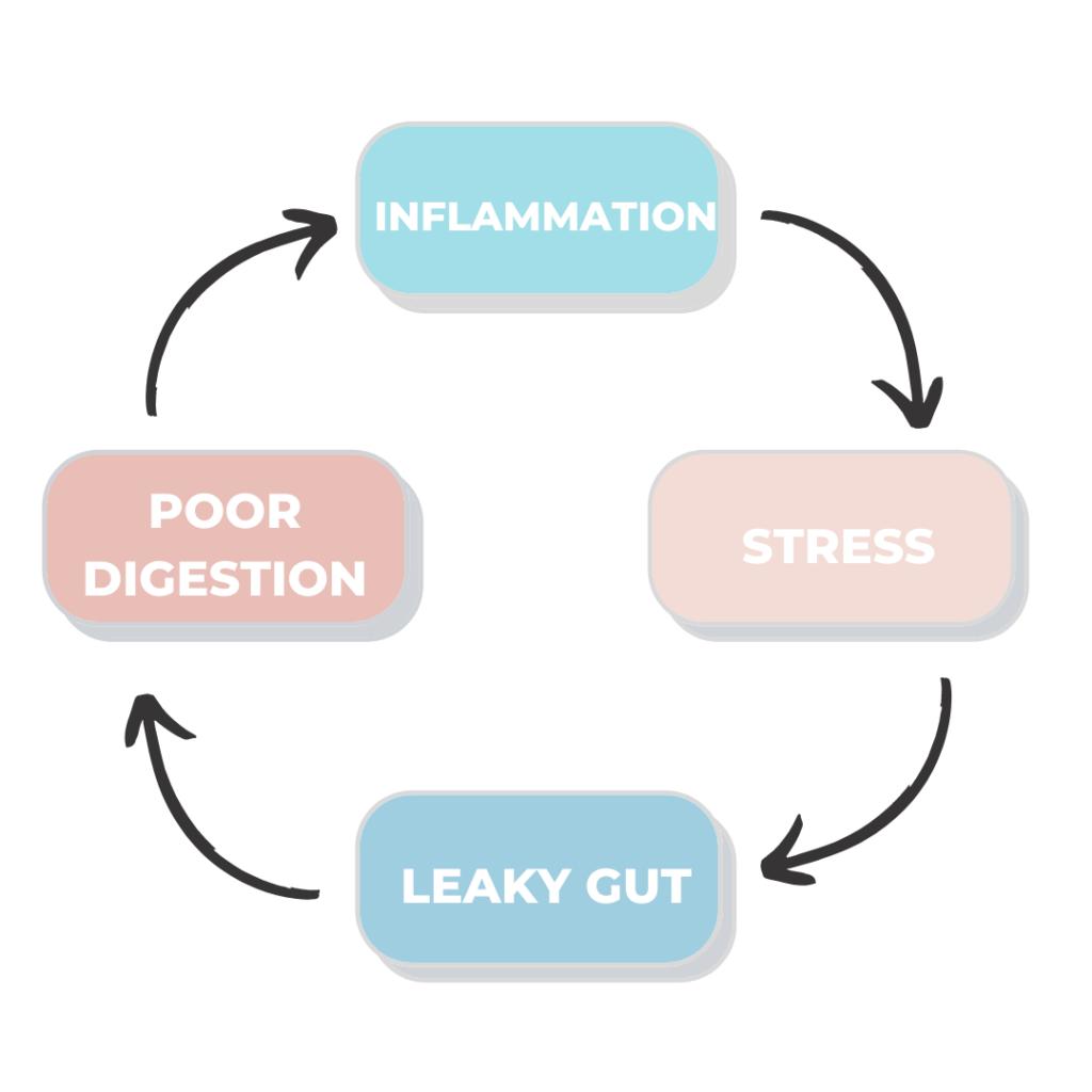 gut inflammation gut health